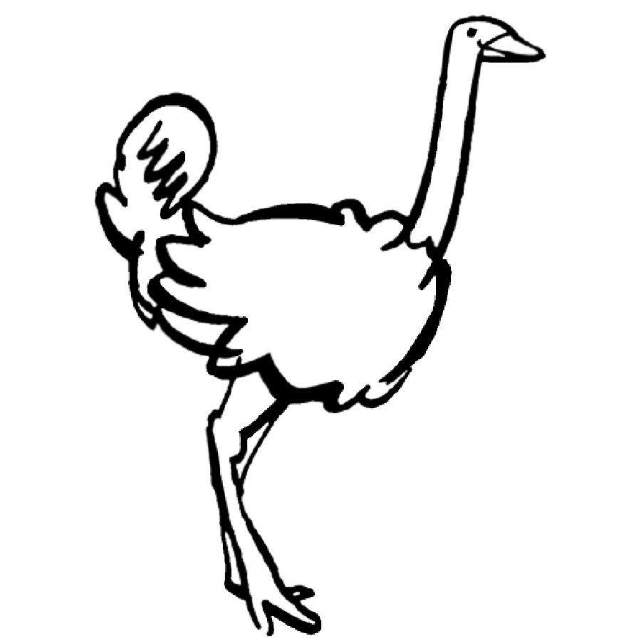 Imprimir Dibujo de avestruz - Dibujos para colorear de animales de ...