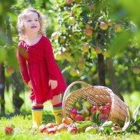 Alimentos ecológicos. Dieta sana para niños