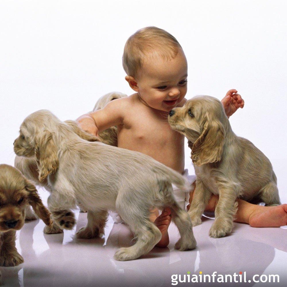 Los mejores vídeos de bebés con mascotas