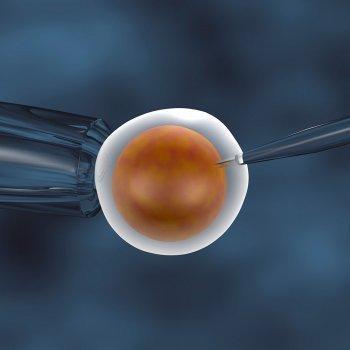 Fecundación in vitro. Preguntas más frecuentes