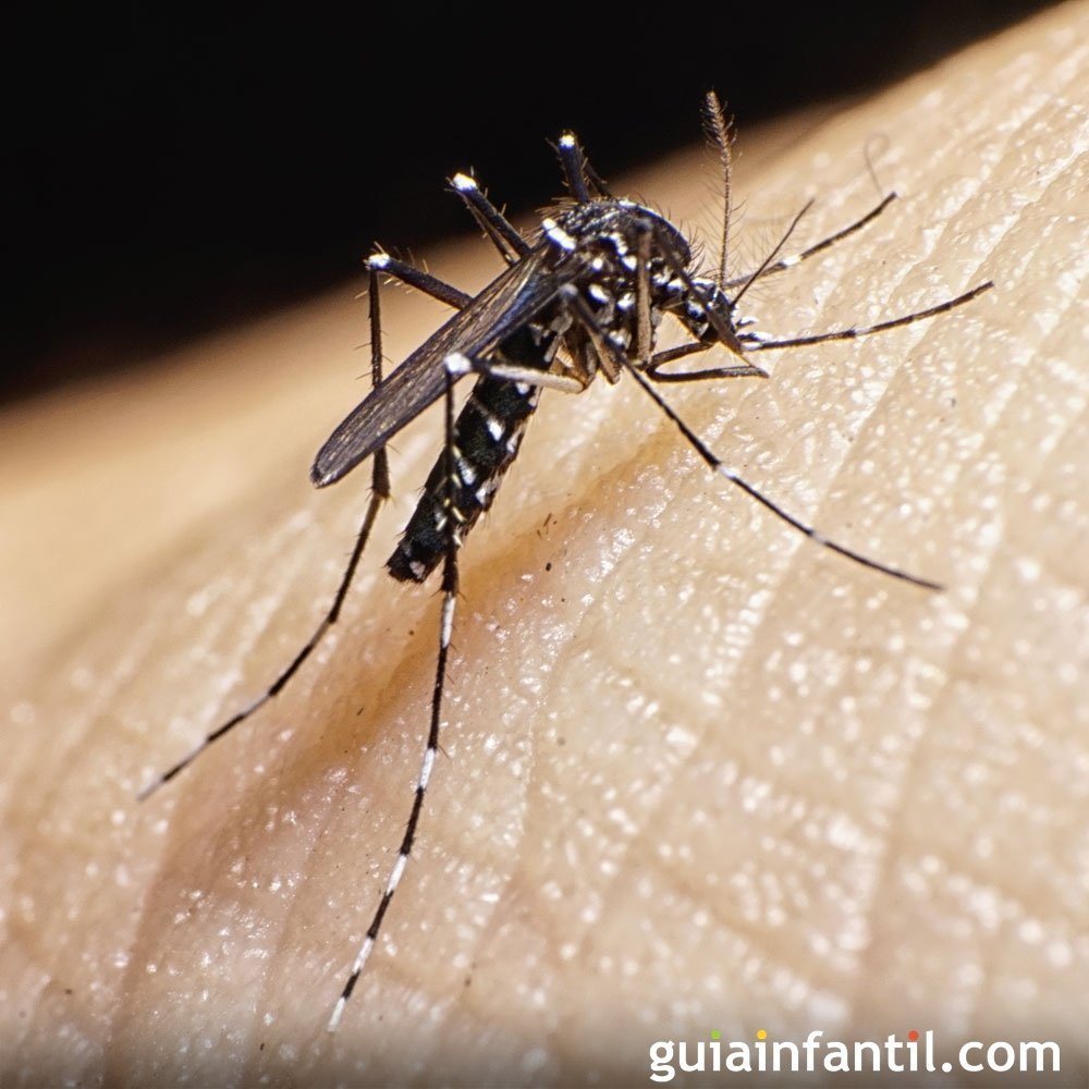 Virus Tus Zika Sobre De Dudas ZikaResolvemos 5Rq34jLA