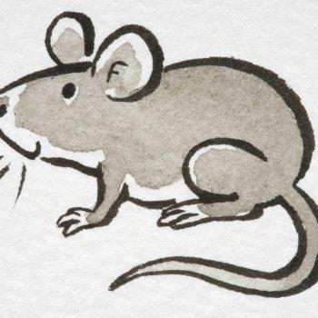 Canción cinco ratoncitos
