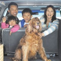 Viajar con mascotas y con toda la familia