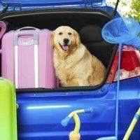 Viajar con mascotas en coche y en avión