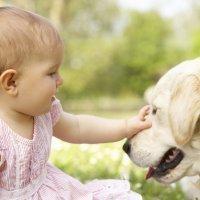 Las razas de perro que mejor conviven con niños