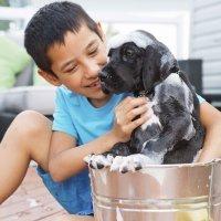 La higiene en la convivencia de niños y animales