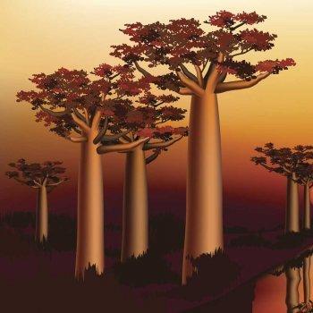 El Baobab