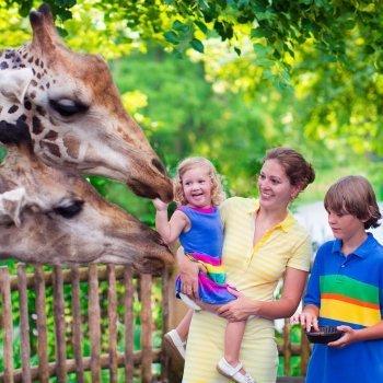 Vídeos de los animales favoritos de niños