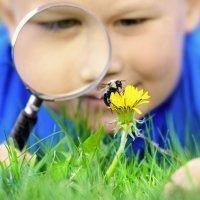 Cómo curar picaduras de abeja o avispa en los niños