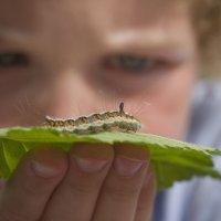 4 insectos que pueden picar a los niños en casa y en el campo