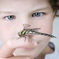 Picaduras de insectos en los niños
