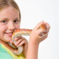Cómo tratar una mordedura de serpiente en niños