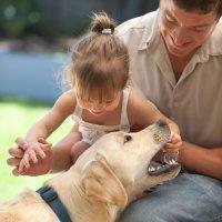 Cómo tratar la mordedura de un perro en los niños