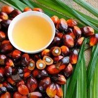 Cosas que debes saber sobre el aceite de palma