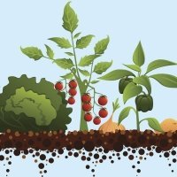 El baile en el huerto. Poema para aprender las verduras y hortalizas