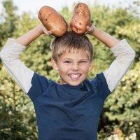 Por qué las patatas son esenciales en la dieta de los niños