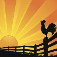 El gallo Miligallo. Cuentos con valores