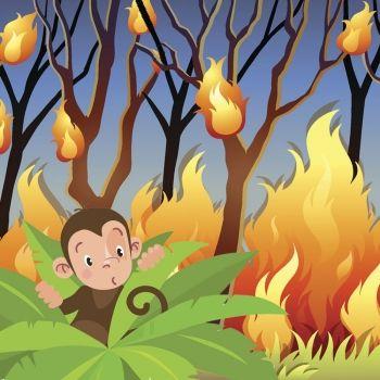 Un incendio en la selva. Cuentos infantiles sobre la cooperación