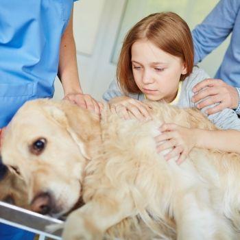 Cómo ayudar al niño a superar la pérdida de su mascota