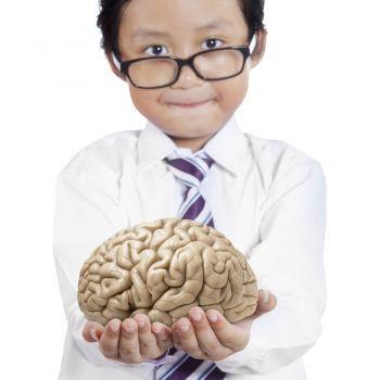 El estómago: el segundo cerebro en niños y adultos