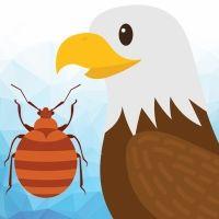 El águila y el escarabajo. Fábula para niños