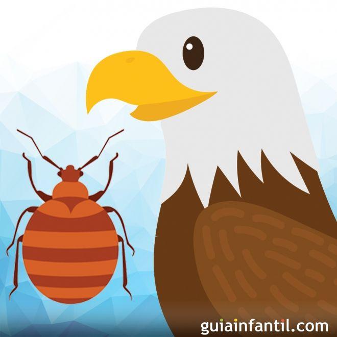 El águila Y El Escarabajo Fábula Para Niños