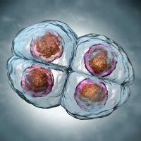 La reducción embrionaria en un embarazo múltiple