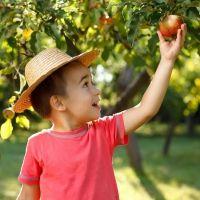 Frutas de otoño para los niños