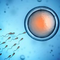 Cómo saber si estás embarazada de gemelos o mellizos. La cigosidad