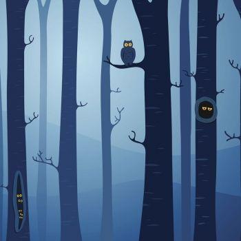 Cuento sobre la razón de que los búhos salgan solo por la noche