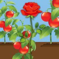 No creyó ser una rosa. Poesía para niños