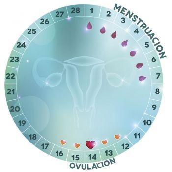 Quedar dias embarazada para