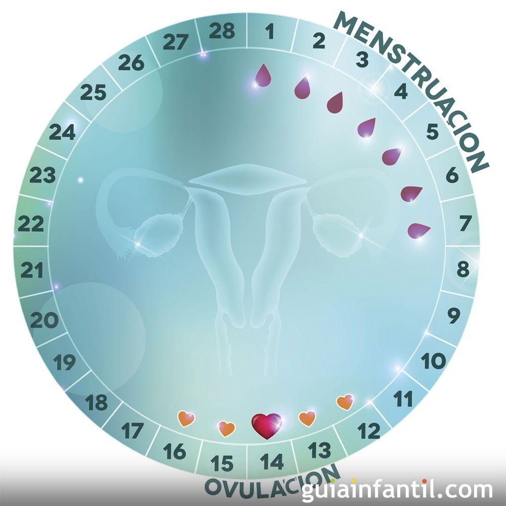 Dias Fertiles Mujer Calendario.Ovulacion Que Es Sintomas Etapas Y Calculadora De Dias