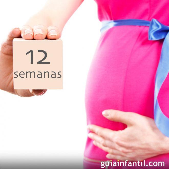 12 semanas de embarazo - De cuantos meses estoy ...