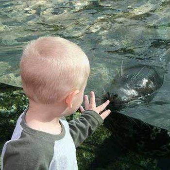 Leones marinos mejoran la calidad de vida de niños autistas