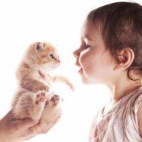 ¿Bebés y gatos pueden convivir?