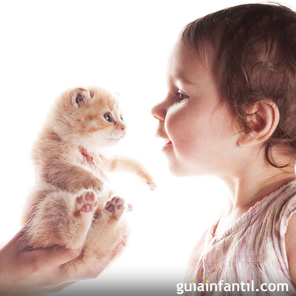 Bebés y gatos pueden convivir juntos?