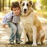 Un animal no debe ser un juguete para los niños