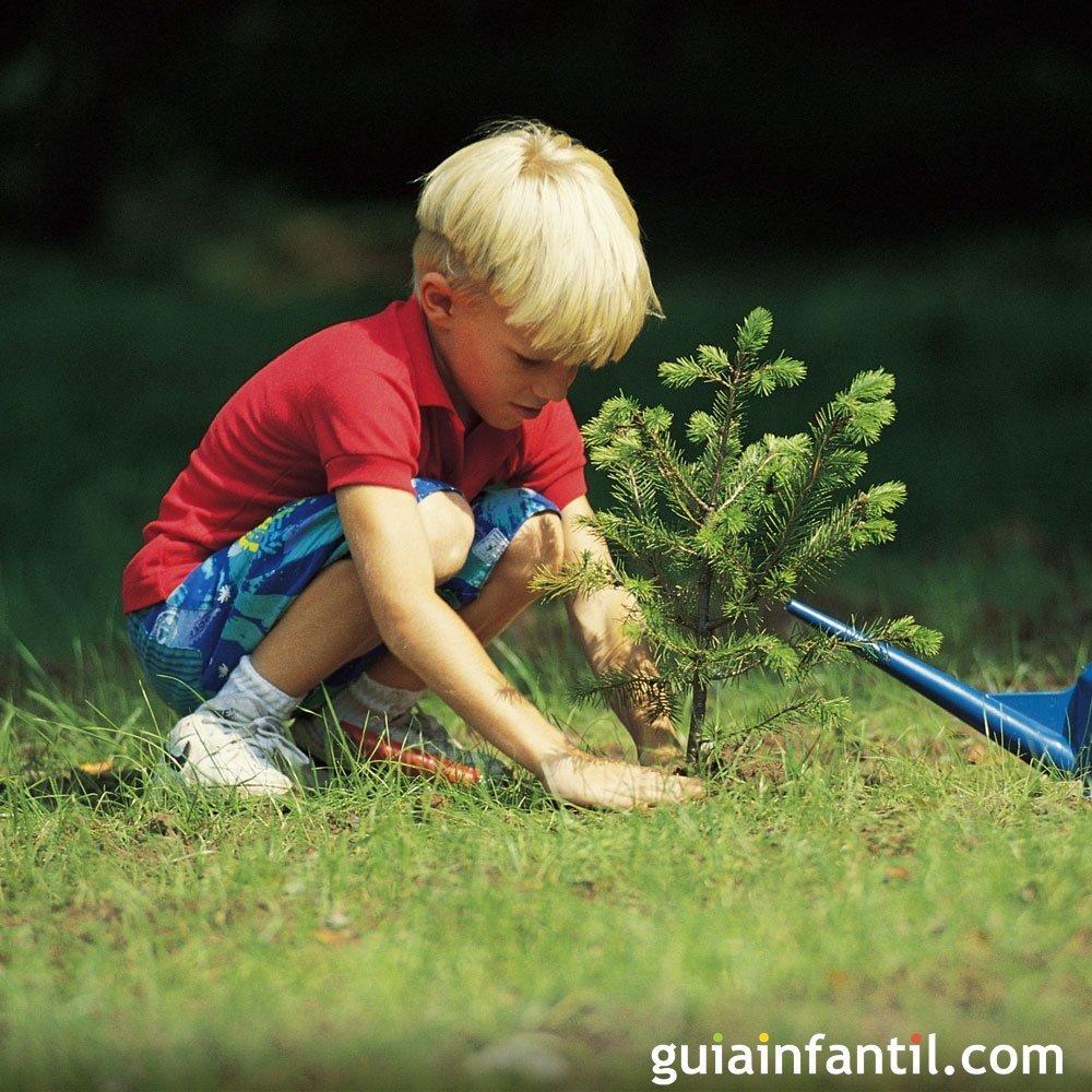 que arbol plantar en mi jardin que arbol plantar en mi