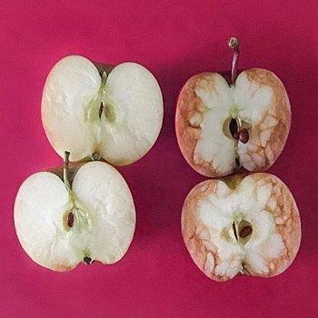 Cómo explicar con manzanas qué es el bullying