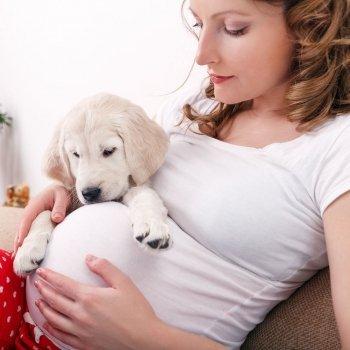 ¿Pueden las mascotas detectar un embarazo?