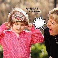 El cerebro del niño no aprende cuando le gritan