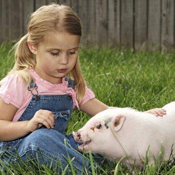 Aprende a dibujar los animales de la granja con los niños