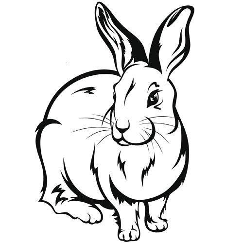 Adivinanza: Tiene las orejas largas