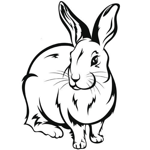 Adivinanza: Prima hermana del conejo