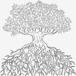 La raíz de los árboles