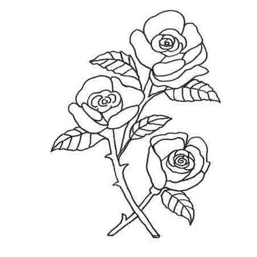 Adivinanza: Cuál es la flor que es más hermosa