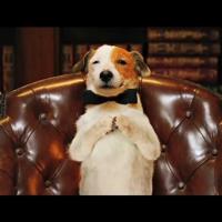Pancho el perro millonario - Película para niños