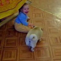 Perro arrastra a un bebé hasta su camita