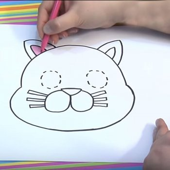 Un gato